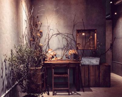 gallery hydrangea