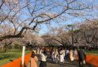 【4月3日〜 ウィークリー告知まとめ版!】今週ピックアップした展覧会・イベント情報
