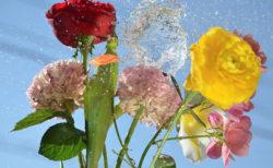W'UP! ★名雪晶子写真展「コン・アニマー魂を込めて、生き生きと」 FUJIFILM SQUARE内 富士フイルムフォトサロン 東京