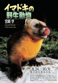 W'UP! ★ 8月24日~10月31日 宮崎 学 イマドキの野生動物 東京都写真美術館 2階展示室