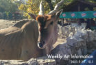 W'UP! ★10月5日~10月10日 休廊/10月12日~10月17日 オガワヒロシ個展 風景色14 線画の世界 DAZZLE